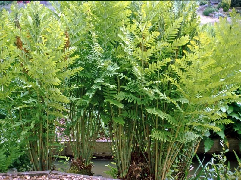 Sklep Ogrodniczy Z Sadzonkami Roślin Flora Skleppl